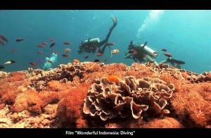 diving di indonesiaproud wordpress com