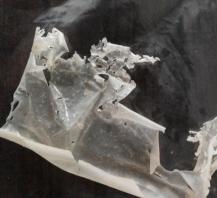 plastik-biodegradable dari sisik ikan di indonesiaproud wordpress com